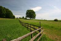 Landschaftliche Idylle mit Baum im Südharz