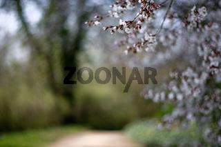 Bluehende Straeucher im Woerlitzer Park