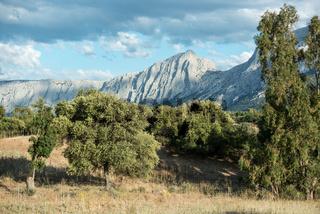 Korkeiche in Sardinien