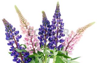 Bluebonne bouquet