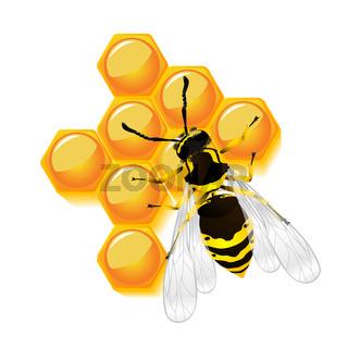 wasp and honeycomb