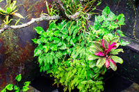 Tropical plants at mossy  wall