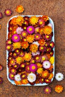 Trockenblumen