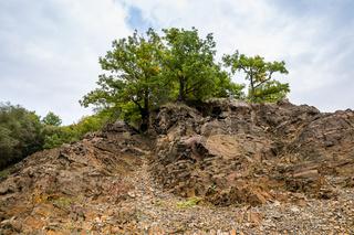 Deutschland, Hessen, Edersee, Ederseerandstraße, Felsen mit Baum am Uferand des Edersees