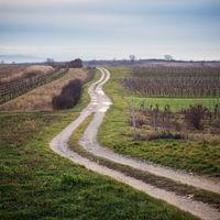 Weg zwischen den Weinbergen im Winter