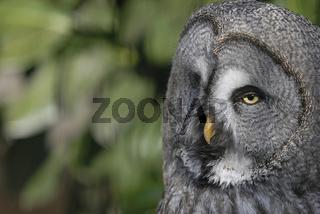 eule 1 - owl 1