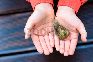 Snail on child hand on the brown terrace background