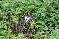 Cute kitten walking in the garden 20557