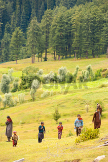 Kashmir Gypsy Goatherders Walking Hill