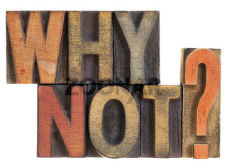 Why not? Question in wood type.