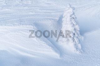 verschneite Fichte, Lappland