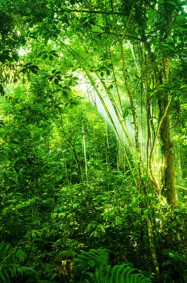 Natural tropical dense forest