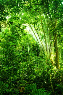 Natural tropical dense forest