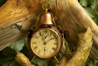 Uhr mit Wurzeln