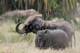 Elefant with cub