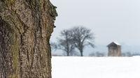 Winterlandschaft mit Kirschbaum und Huette im Burgenland