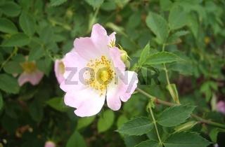 Sommerblüte