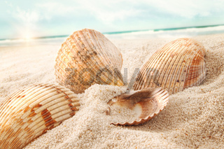 Seashells in the sand at the beach