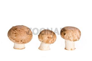group of mushrooms isolated on white background