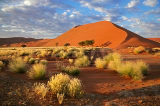 Grass, dune and sky