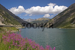 Stausee bei Livigno / lake with flowers