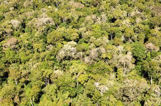 Ueber dem Amazonas Regenwald