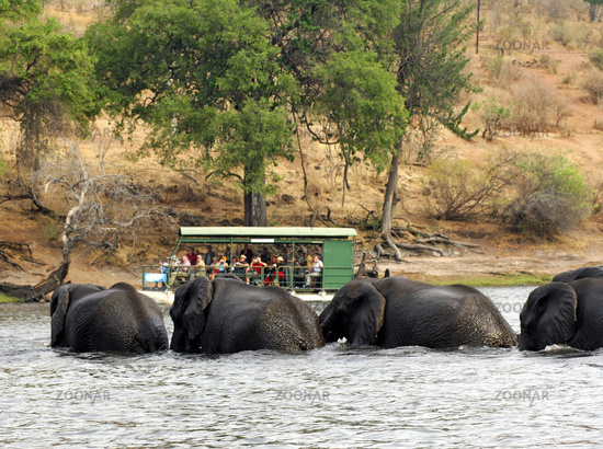 Touristen beobachten Afrikanische Elefanten Chobe River