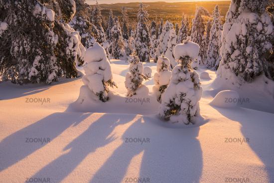 verschneiter Wald, Riisitunturi Nationalpark, Lappland