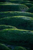 Hunstanton Beach - Green Rocks