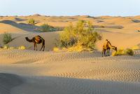 Sand dunes in Dasht-e Kavir