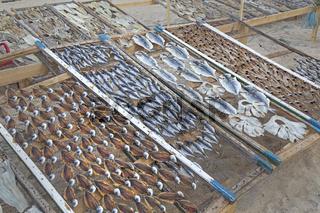 Fisch trocknet in der Sonne, Strand Praia da Nazare, Nazare, Oeste, Distrikt Leiria, Portugal, Europa