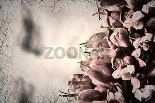 Surreale Blüten mit Unschärfe