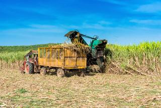 Maschinelle Zuckerrohr Ernte auf dem Feld im Binnenland von Kuba - Serie Cuba Reportage