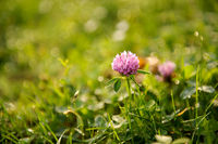 Stand-alone flower on grass background in the field