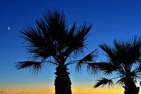 Palmen Silhouette