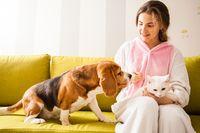 pets love their mistress