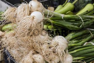 Lauchzwiebeln auf dem Markt, spring onions on the market