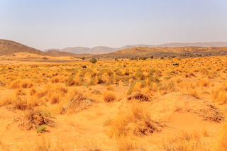 Beautiful Moroccan Mountain landscape with dry shrubs in foreground