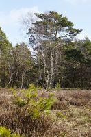 Forstwirtschaft - Wald