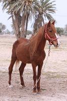 Dürres Pferd