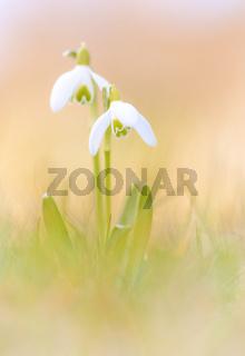 Frühling auf zarte Art