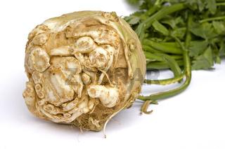 Knollensellerie/ celery