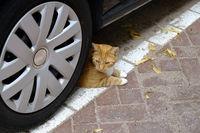 Katze in Gefahr