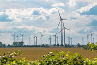 A lot of windmills producing clean energy