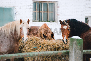 horses in the enclosure at the horse farm