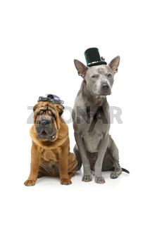 beautiful two dogs