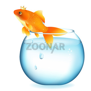 Dreaming Goldfish In Aquarium