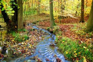 Märchenhafter Wald mit Bach im Herbst
