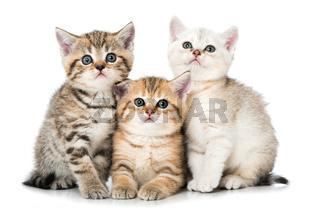 Drei kleine Katzen