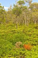 Waipoua Kauri Forest, New Zealand